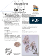 Yarrow Herbal Tea