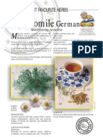 Chamomile German-herbal Tea
