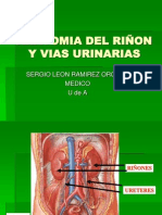 Anatomia Riñon.ppt