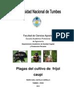 Manual de Plagas de Frijol CAUPI NEW 2013