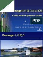 Promega体外蛋白表达系统