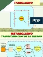 Metabolism Oba 03