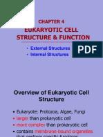 Chap4.1 Eukaryotic Cell