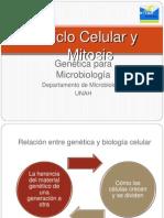 2.1 Ciclo Celular y Mitosis