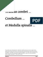 Truncus Cerebri, Cerebellum, Medulla Spinalis