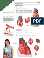 Anatomie&Biologie