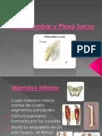 Plexo Lumbar y Plexo Sacro