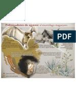 El Murcielago magueyero es vital para preservar el agave mexicano.