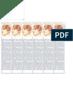 El Sistema Nervioso, separadores.docx