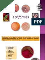 42961791-coliformes