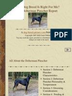 Doberman Pinscher Breed