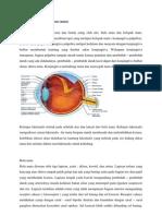 anatomi sensori
