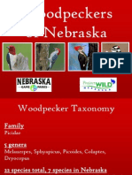 Woodpeckers of Nebraska PowerPoint