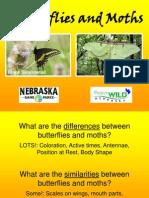 Butterflies and Moths PowerPoint