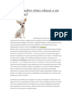 Quieres saber cómo educar a un Chihuahua