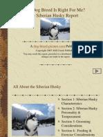 Siberian Husky Dog Breed Review