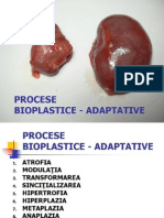 procese bioplastice adaptative