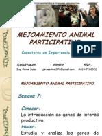 Mejoramiento Animal Participativo