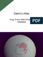 FrogSerial-2