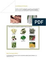 60574993-Siembra-Directa-de-Hortalizas-en-El-Huerto.pdf