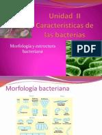 Unidad  II Características de las bacterias