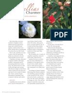Camellias Pg 1