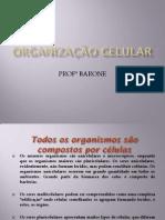 1- Organizacao Celular Basica