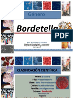 Bordetella Enero 2013