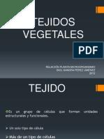 TEJIDOS VEGETALES 2012