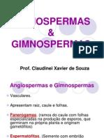 ANGIOSPERMAS E GIMNOSPERMAS - 2ºANOc