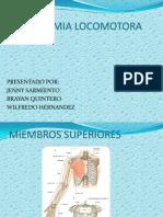 Anatomia Locomotora