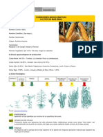 cultivo_maiz.pdf