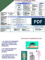 Historia Natural de La Enfermedad Dengue