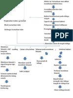 Patofisiologi Otitis Media Akut-