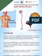 sistemanervoso-130121102126-phpapp02