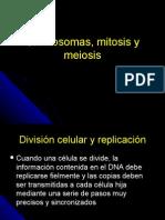 Clase 8. Cromosomas Mitosis Meiosis