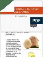 3huesos Del Craneo Dr. Bolivar