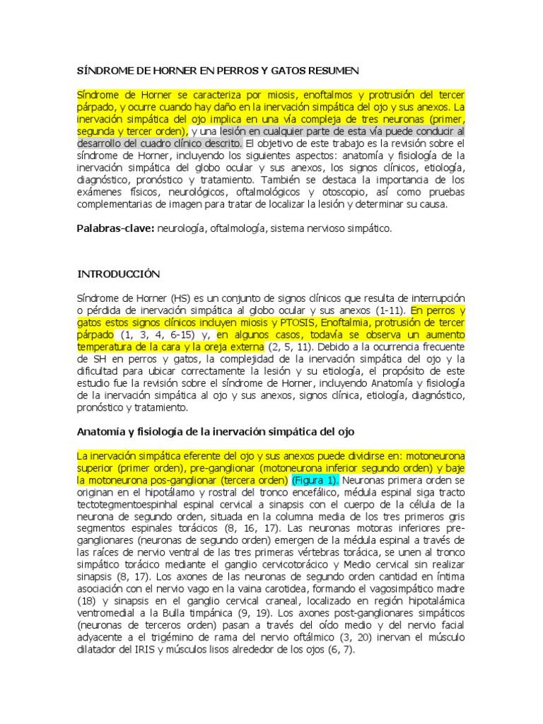 Excelente Anatomía Y Fisiología Del Gato Versión Fotos - Imágenes de ...