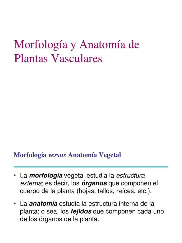 tipos de plantas.pdf