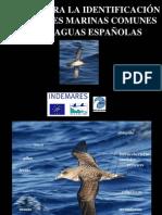 Claves Para La Identificacion Aves Marinas PI