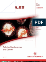Cellular Mechanisms and Cancer - BioFiles Issue 2.4