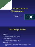 Genome organization 1.ppt