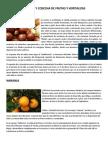 Siembra y Cosecha de Frutas y Hortalizas