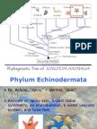 BIO1 - Echinodermata