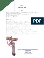Fisiopelecap02 Anexos Pele