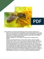Alchimia albinelor