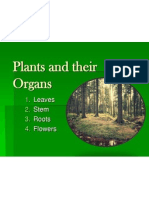 plant systems notes ppt