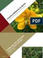 PresentacionPlantas-UNAM02.pdf