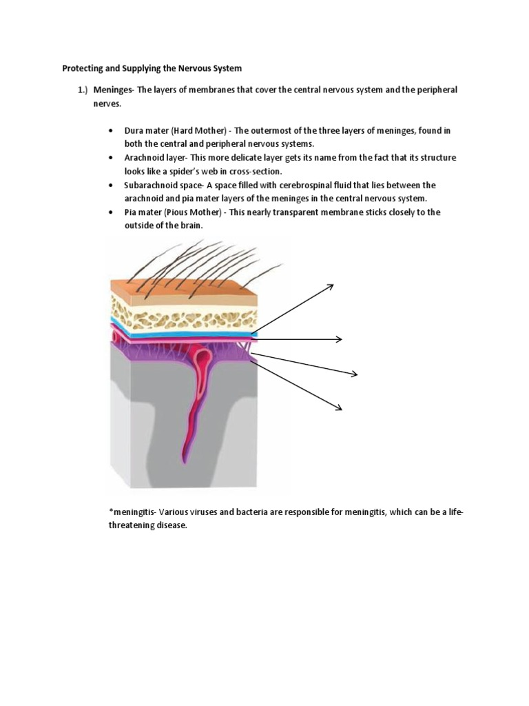 Physiological Psychology   Cerebrospinal Fluid   Cingulate Cortex