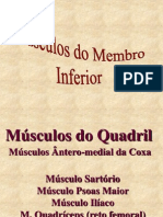 10-Músculos-do-Membro-Inferior